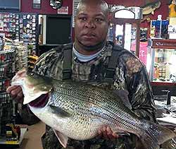 New lake record set at Lake Hefner for hybrid striped bass at 16.1 pounds!